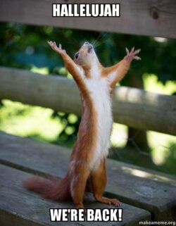 """Squirrel says """"we're back"""""""