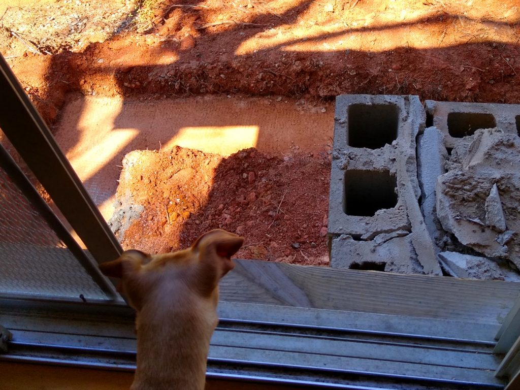 Hope the dog looking down on new back deck footings